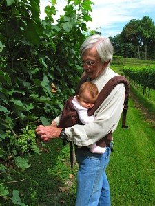 Carl Fackler pruning vines with his sleeping granddaughter